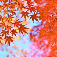 紅葉の季節になりました